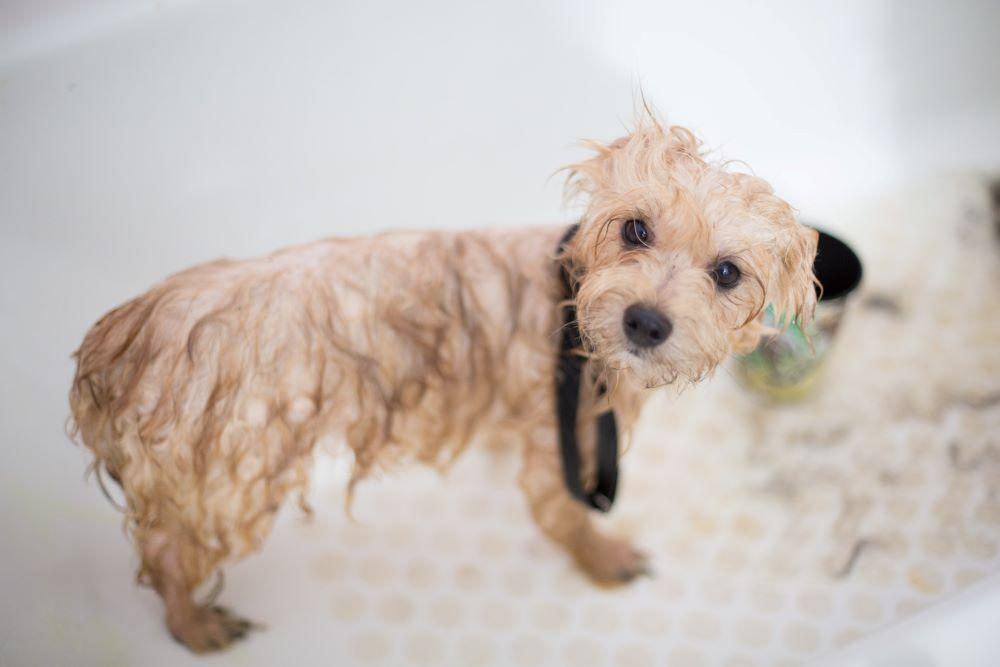 Pets and Plumbing
